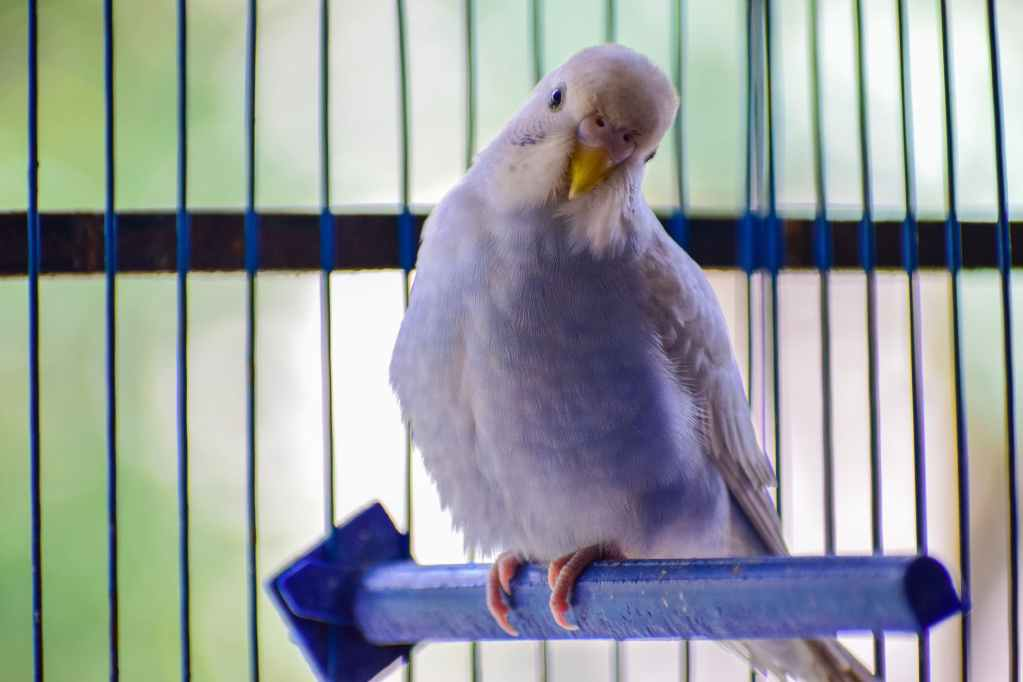 words of white bird perched on cage
