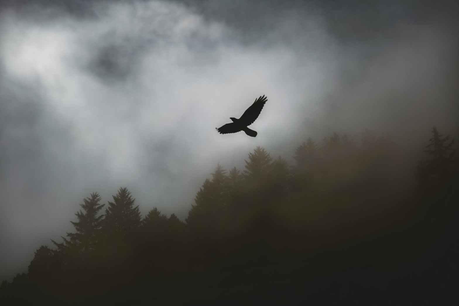 mighty hawk