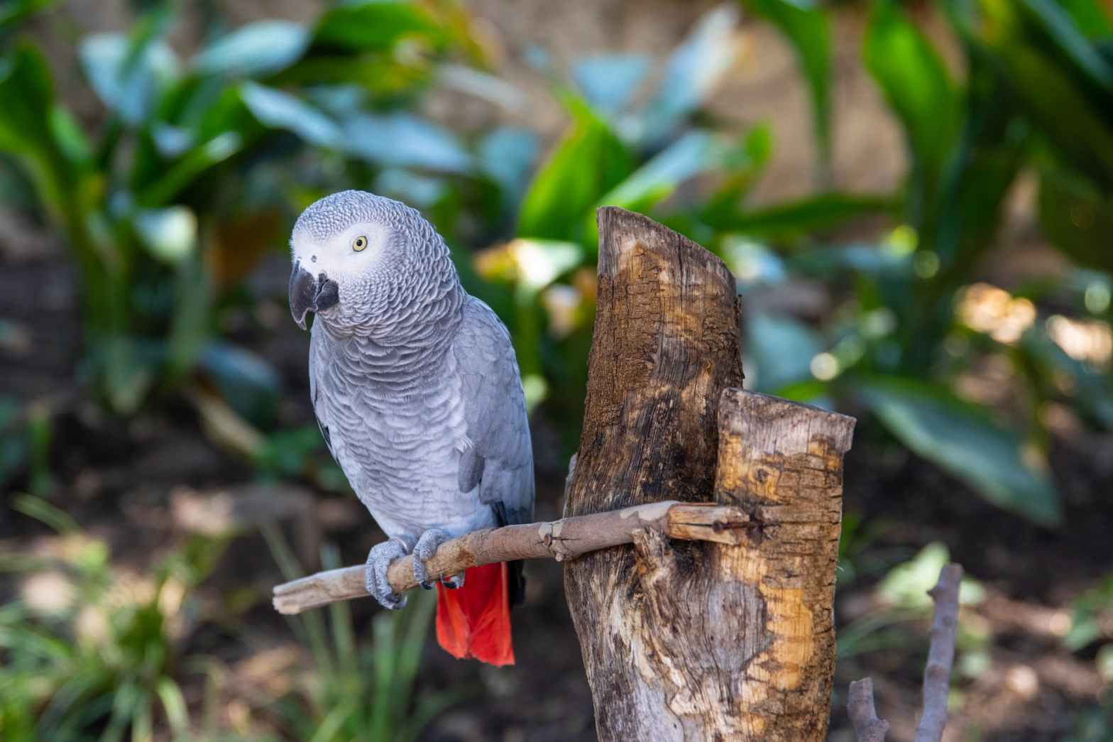 words of selective focus photography of african grey parrot perched on branch
